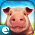 体验猪的一生