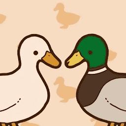 家鸭or野鸭
